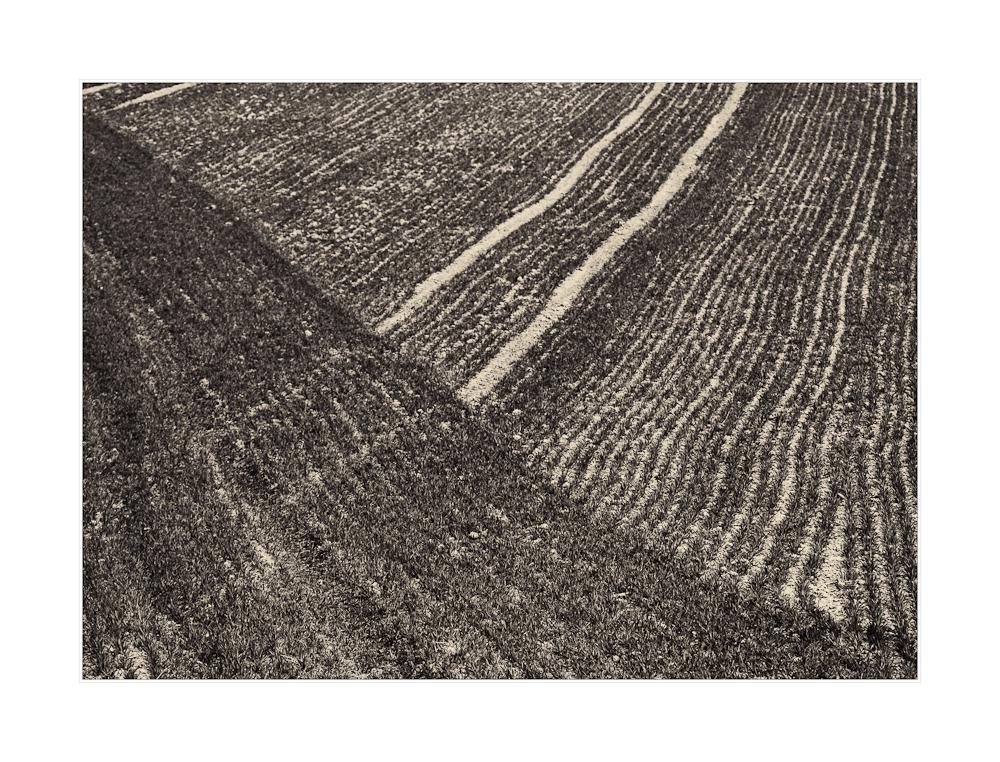 Linien auf dem Feld