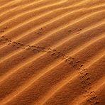 Linien des Windes - Linien der Tiere