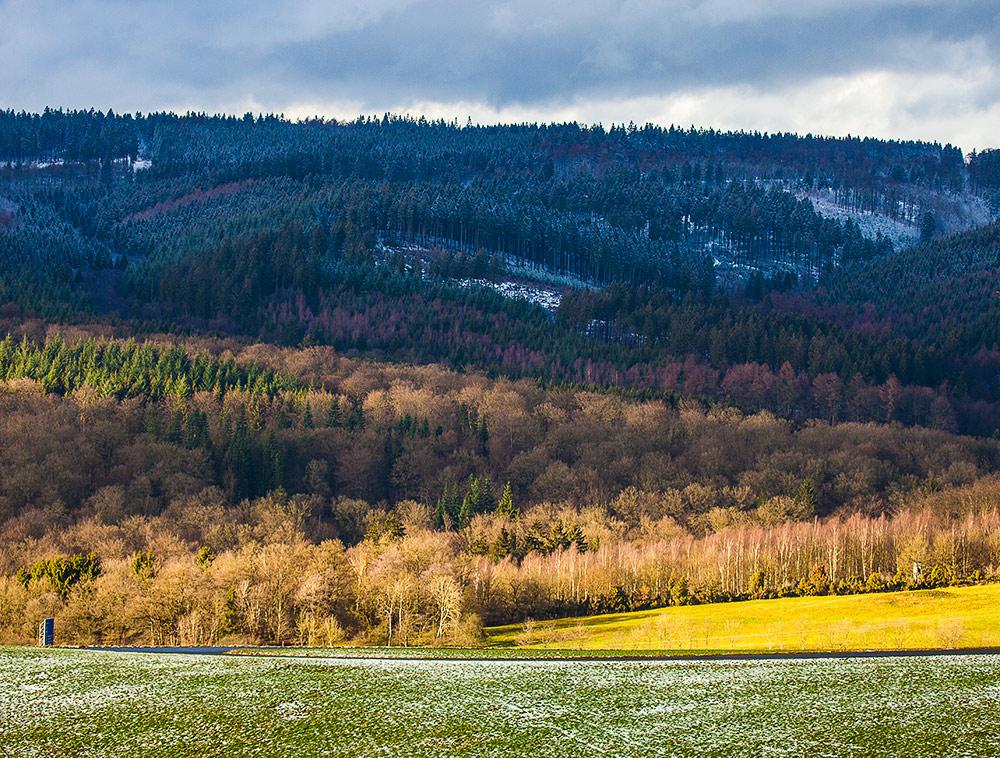 Linien im Arnberger Wald