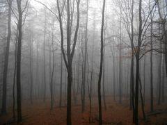 Linien im Nebel