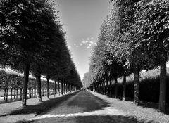 linien mit bäumen
