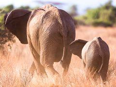 Linksabbiegende Elefanten
