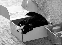 Lio in the box