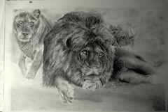 Lion Dawn
