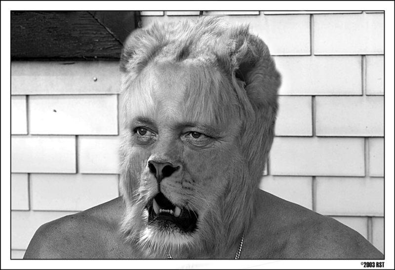 lion - der profi