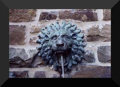 -lion-