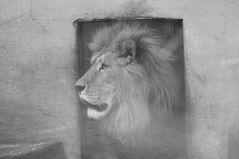 Lion King / Part II