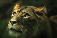 lion lady