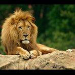 Lion Look
