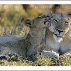 Lioness & Cub - Kruger National Park, South Africa