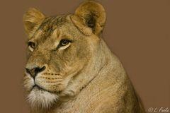 *** lioness ***