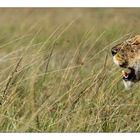 Lionne Massaî Mara