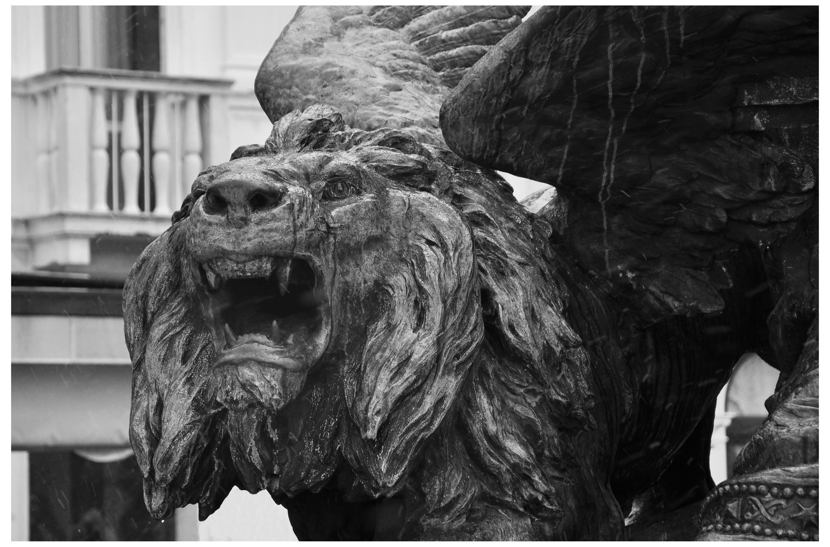 Lions of Venice 2