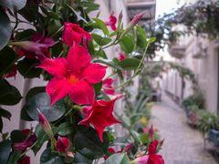 LIPARI - die Blumenstadt