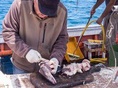LIPARI, Fisch-Handwerk