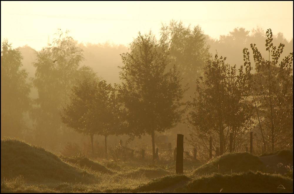 Lippesee