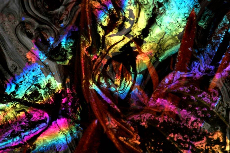 Liquid Forest - Creatures