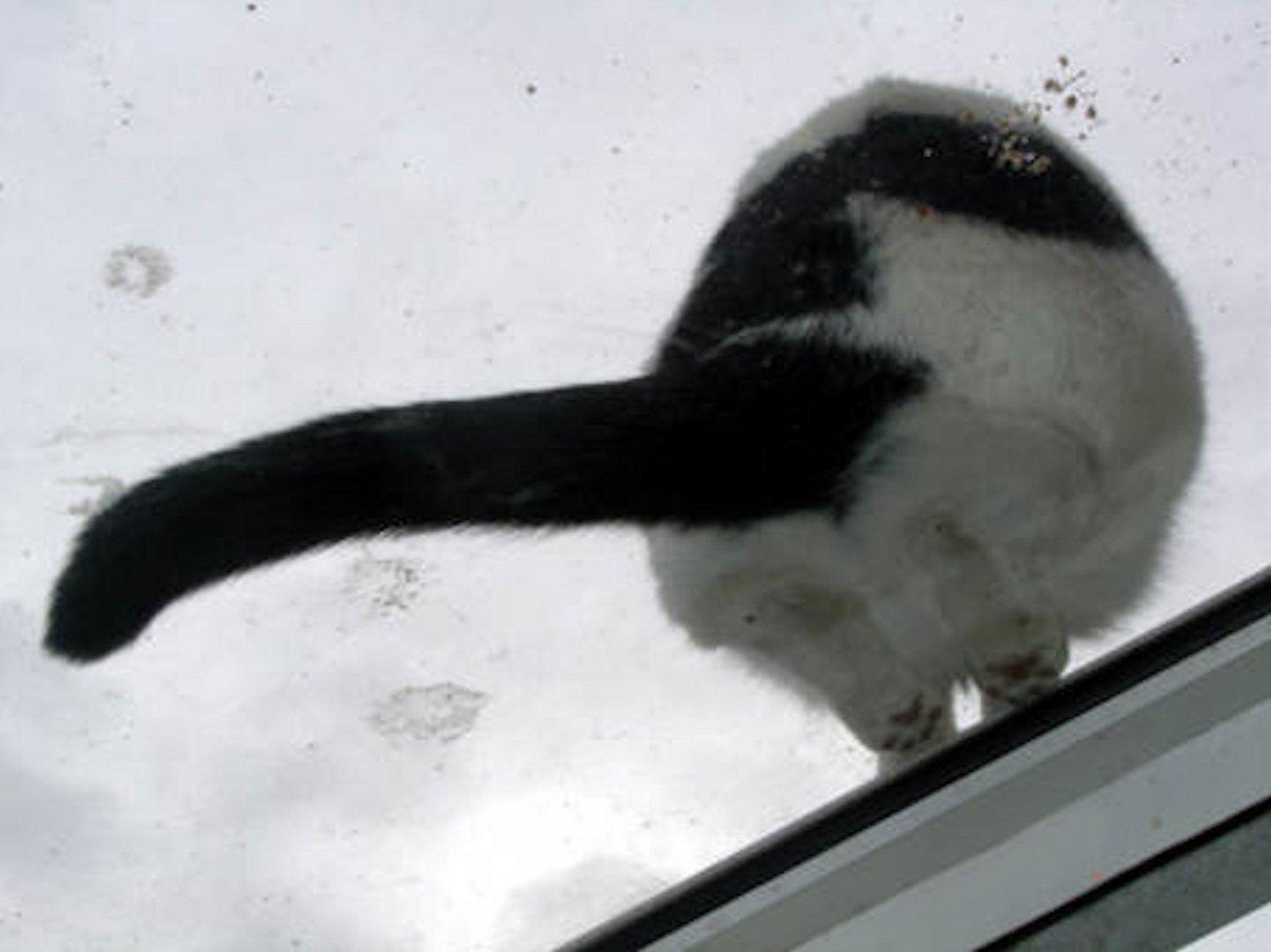 Lisa auf dem Glasdach