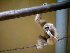 Lisabon Primatengehege II