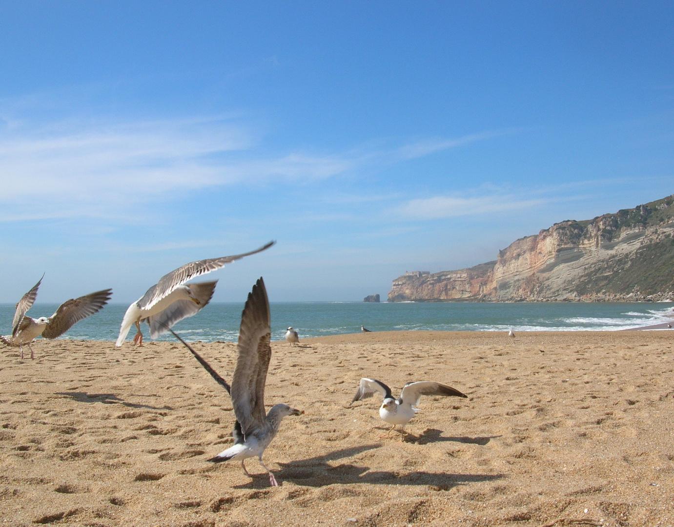 Lisboa 2006. Waterbirds...