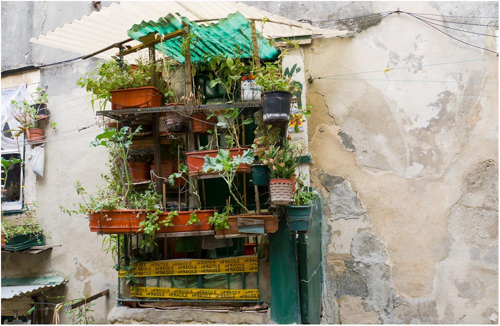 Lissabon, der eigene kleine Gemüsegarten....