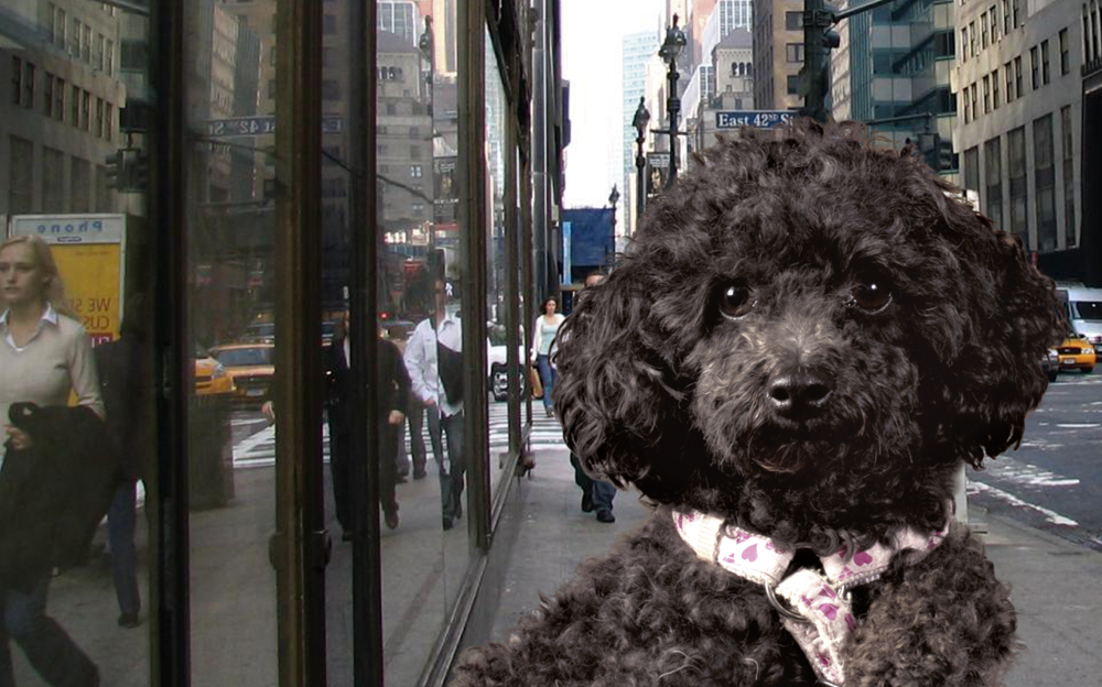 Lissy in New York