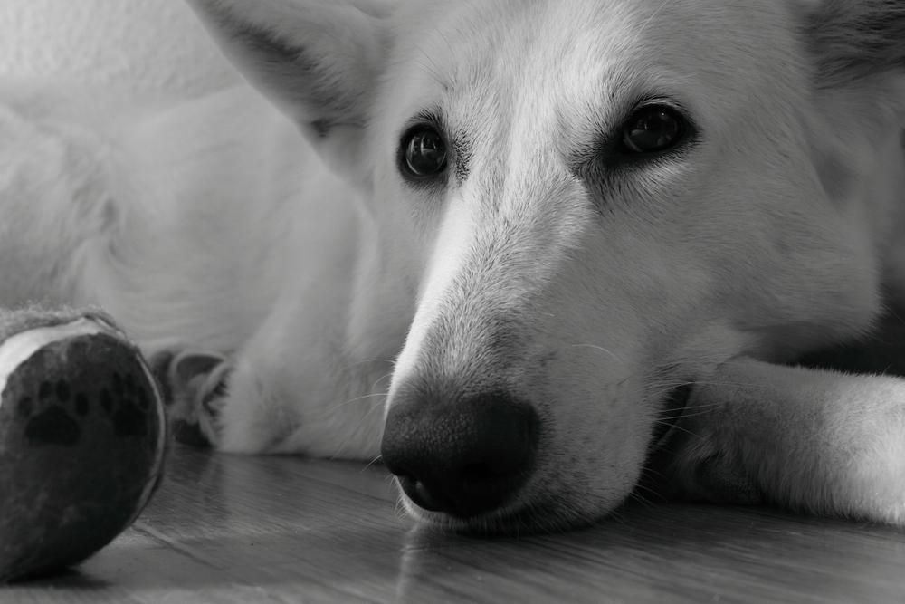 Lissy und ihr Ball