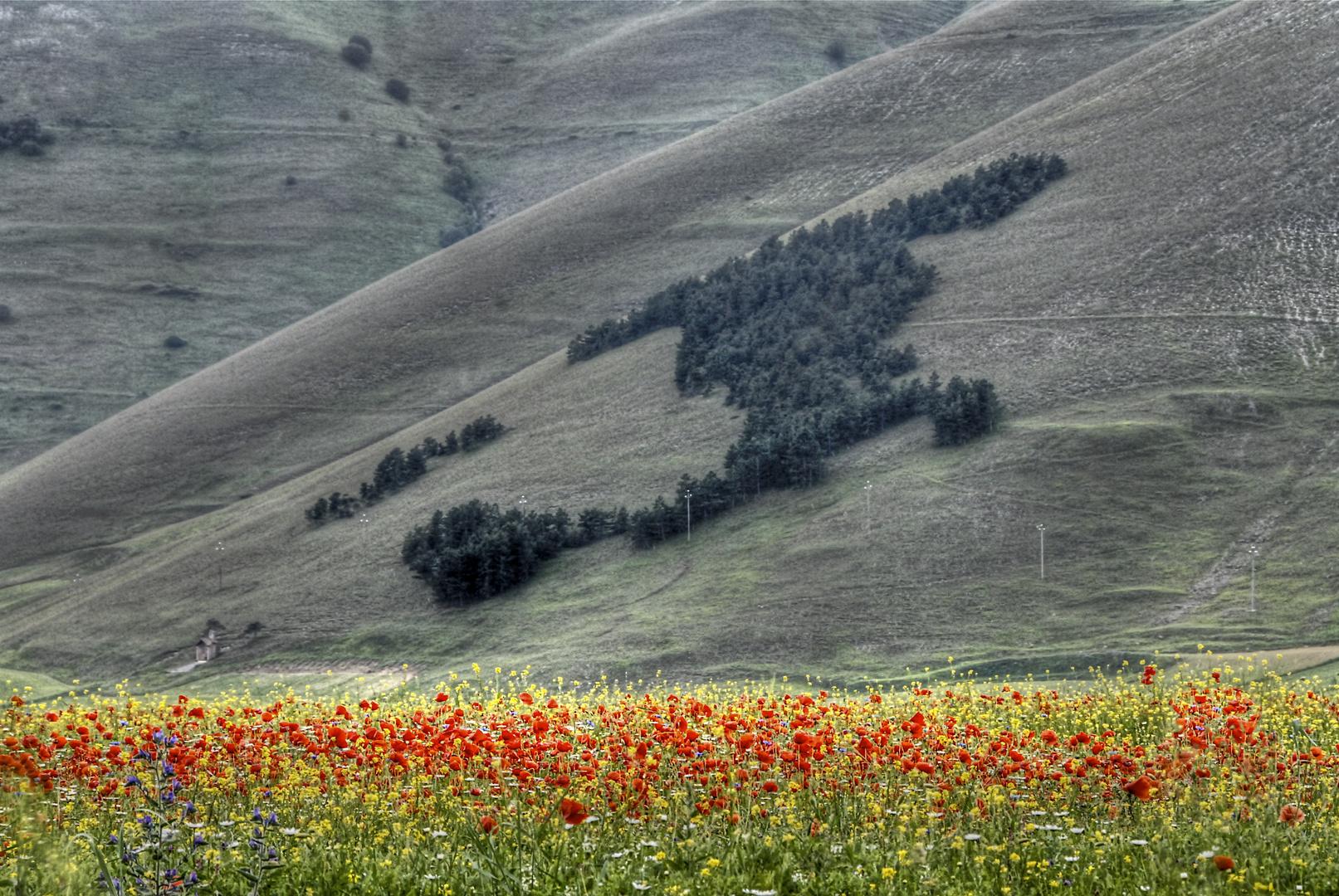 L'ITALIA CHE NON T'ASPETTI