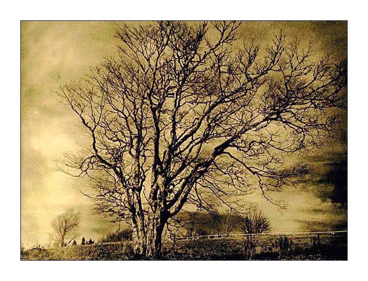 Lith-Baum