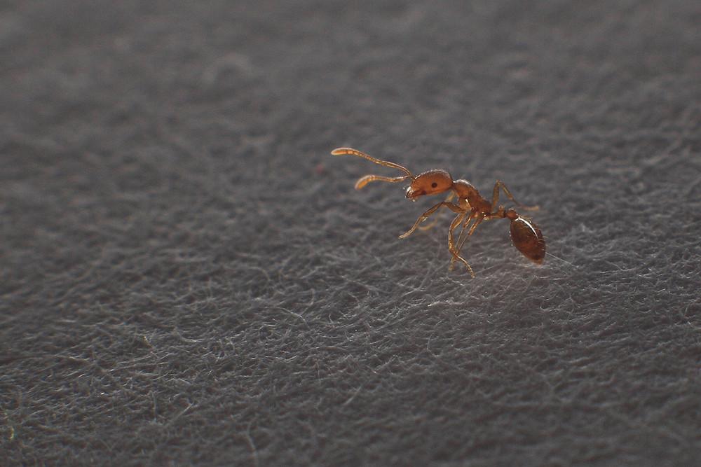 Little Ant