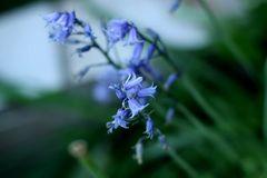 little Blue 2