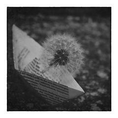 *little boat trip* (7)