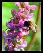little bumblebee