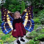 Little Butterfly *re*
