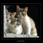 little cats