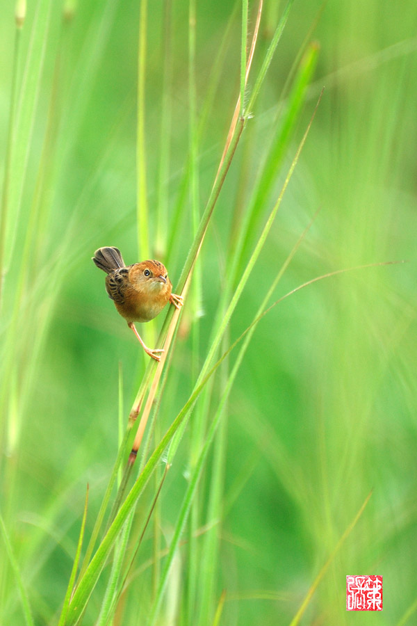 Little Cute Birdie