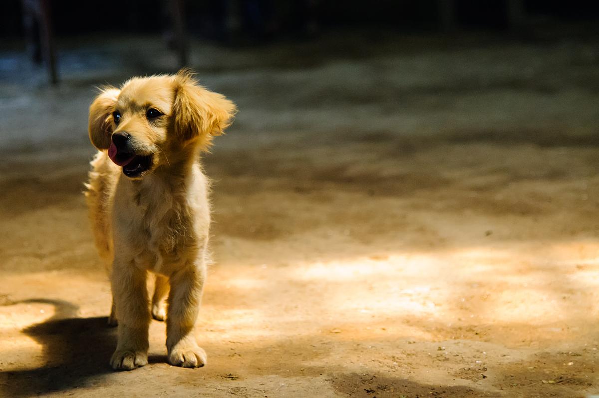 Little Doggy