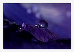 Little Drops *