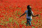 Little Girl in a Poppies Field