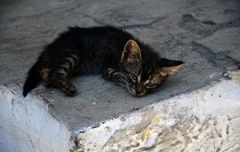 Little Greek Cat