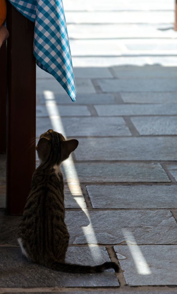 Little Greek Cat II