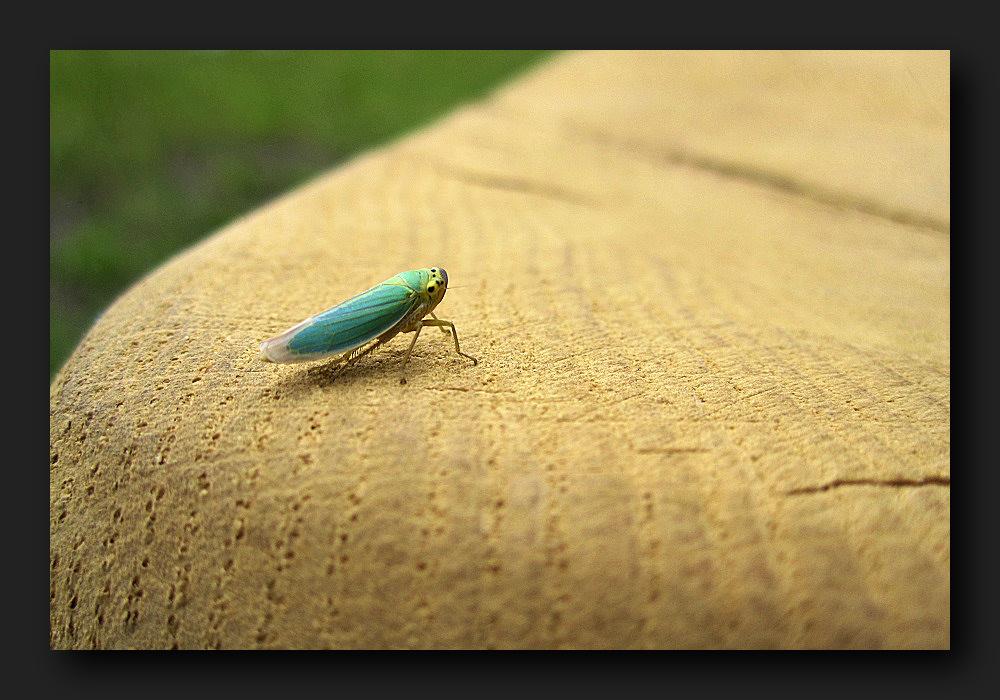 Little green obstinate beast