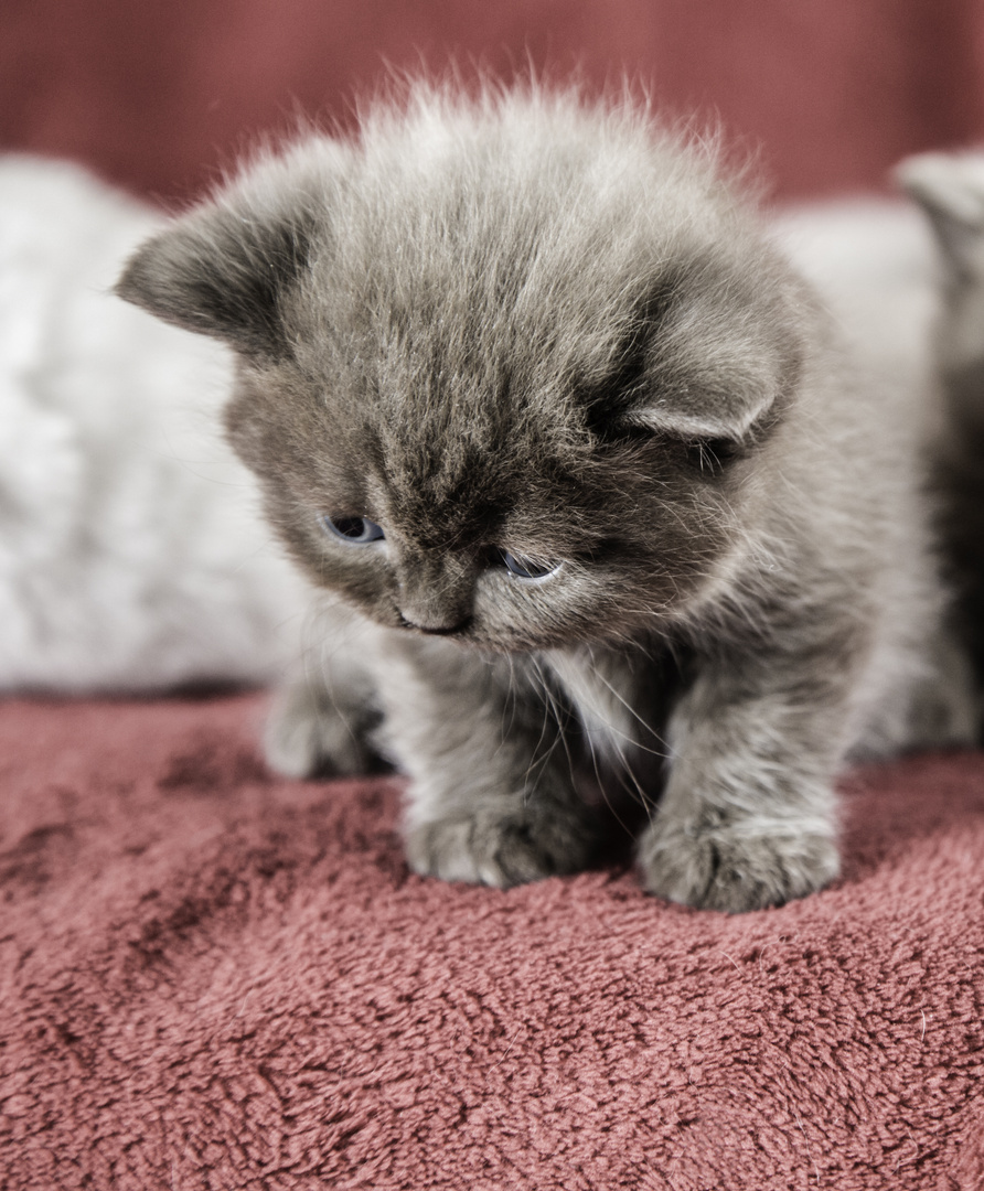 ~little kitten~