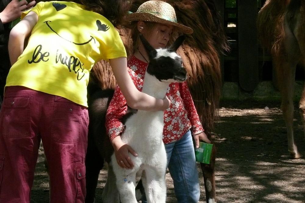 little lama - be happy