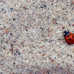 Little red bug, oh so cute, Here's a black spot for your suit.