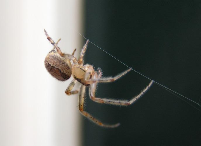 Little spider in my back-garden...