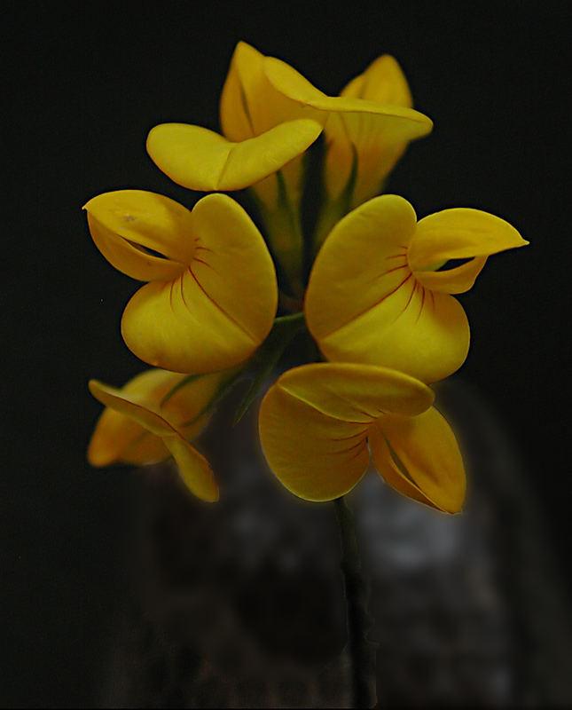 Little yellow weed