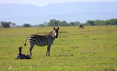Little zebra and his Mom.