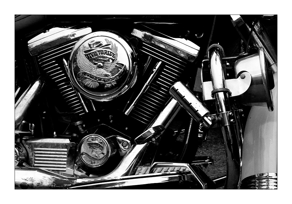 +++ live to ride +++