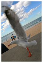 Live'n let fly